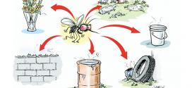 पावसाळ्यातील साथीचे रोग ः डेंग्यू ताप