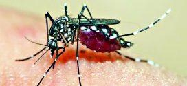 राज्यातील प्रमुख शहरांत 'डेंग्यू'चा कहर